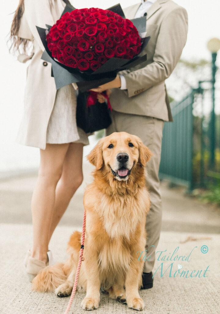 香港狗狗求婚